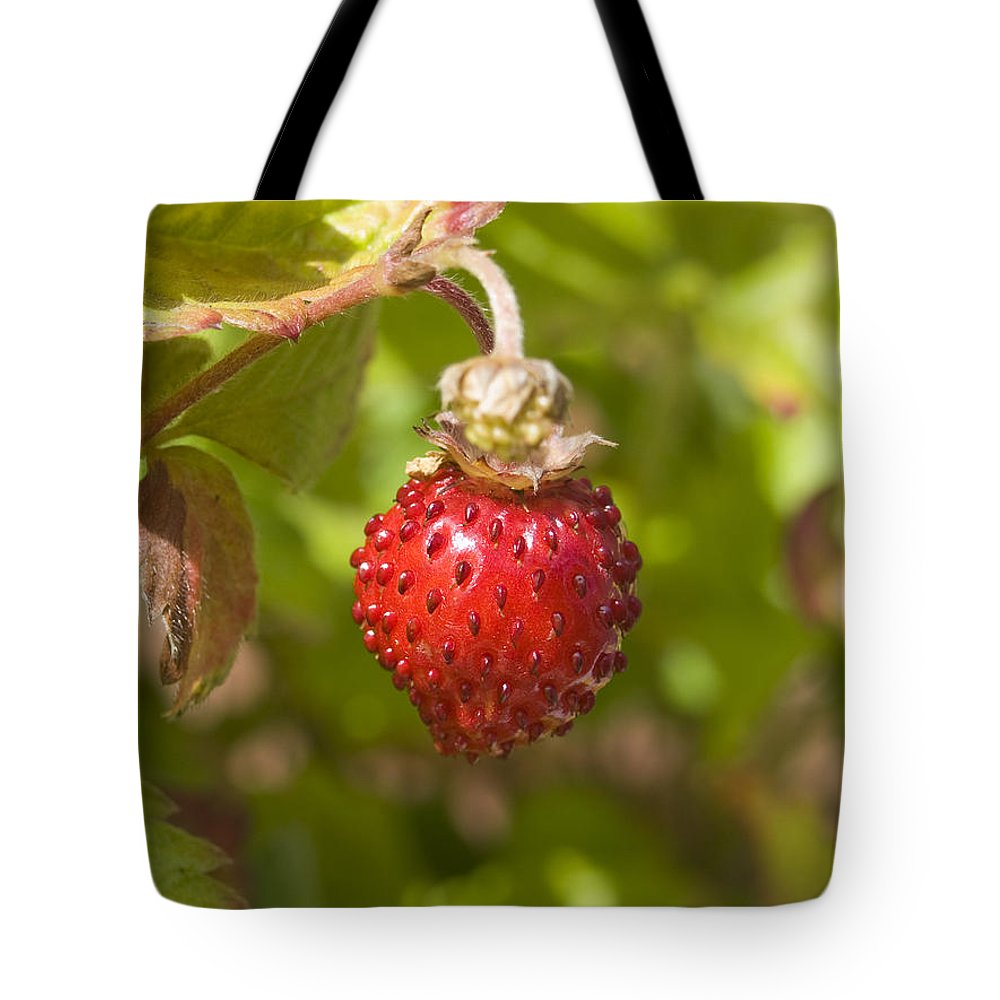 Strawberry Tote Bag featuring the photograph Strawberry by Steev Stamford