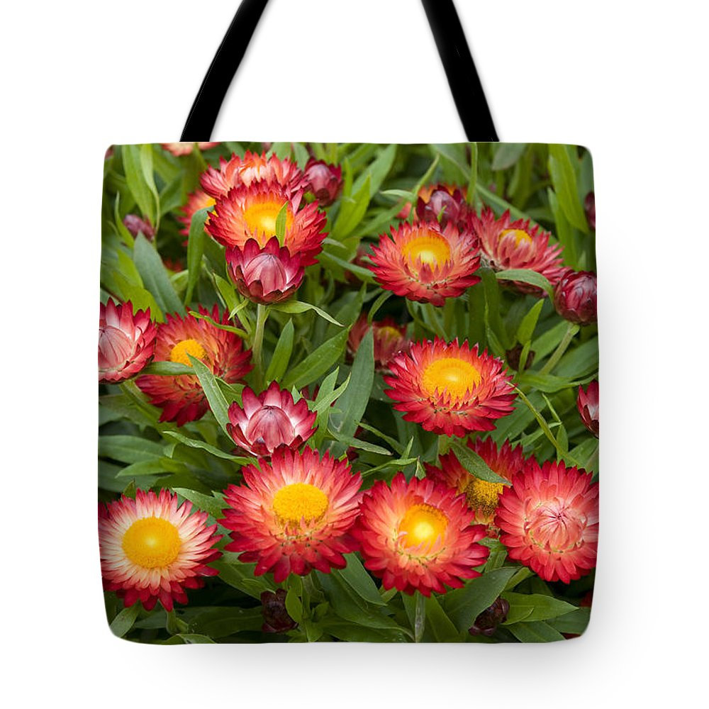Vp Tote Bag featuring the photograph Strawflower Helichrysum Sp Red Variety by VisionsPictures