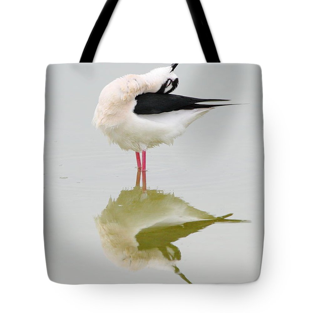 Black-necked Stilt Tote Bag featuring the photograph Stretch by Andrew McInnes