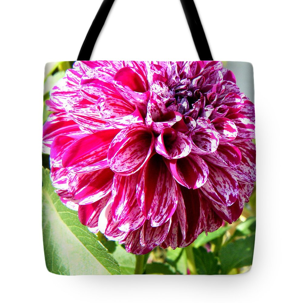 Landscapes Tote Bag featuring the photograph Striped Dahlia by April Patterson