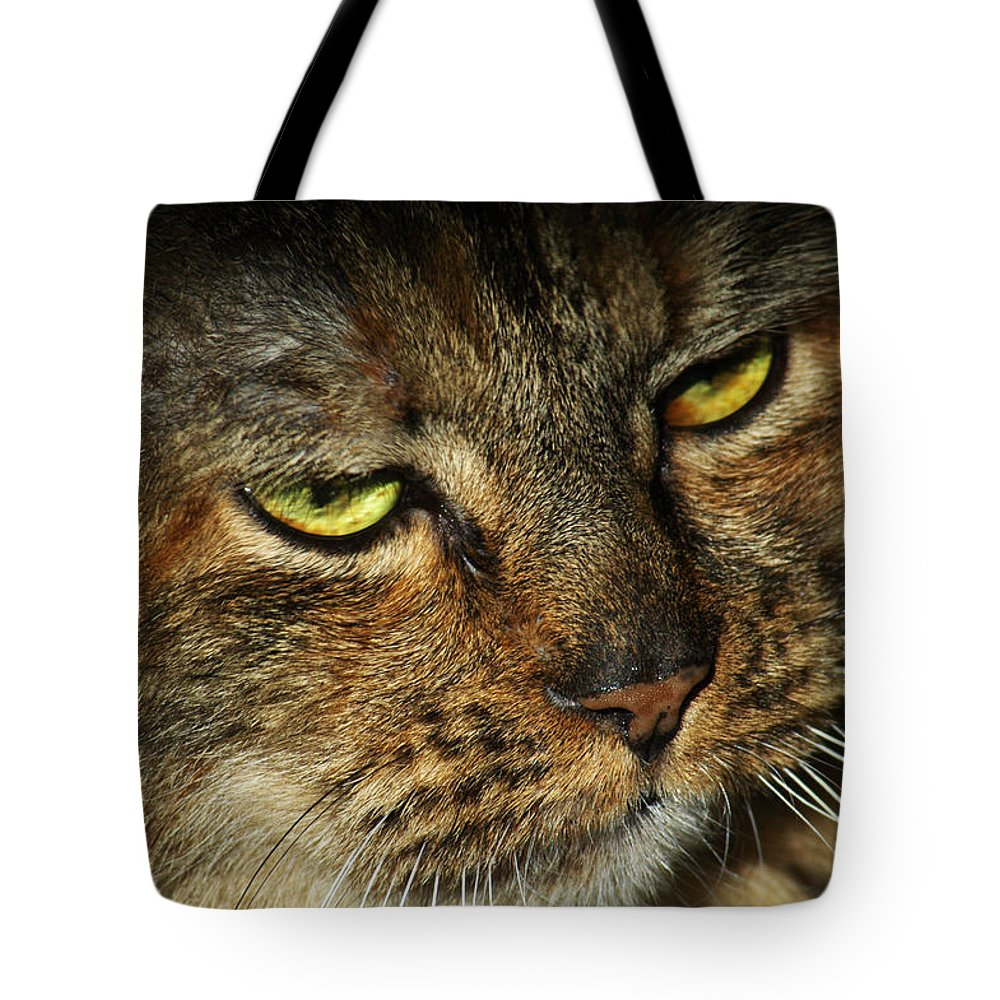 Cat Tote Bag featuring the photograph Stubbs 2 by Carlene Salazar
