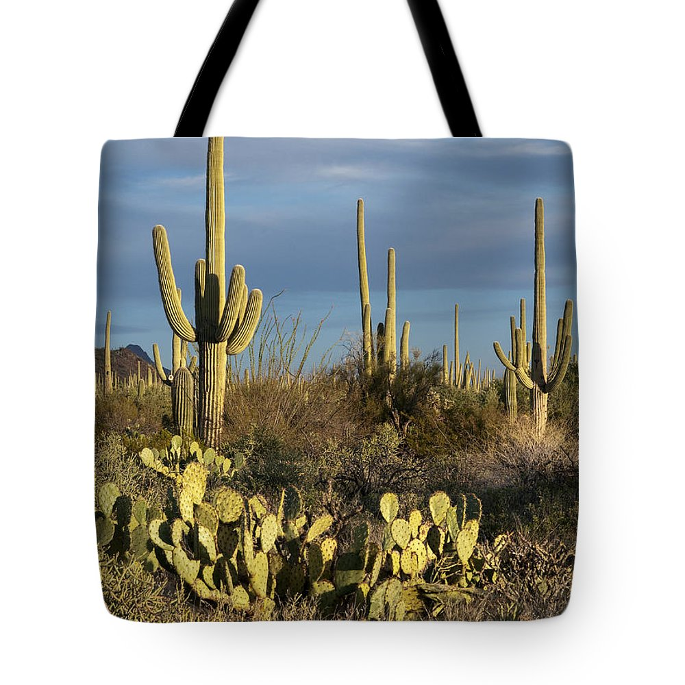 Landscape Tote Bag featuring the photograph Suguaros At Sunset by Sandra Bronstein