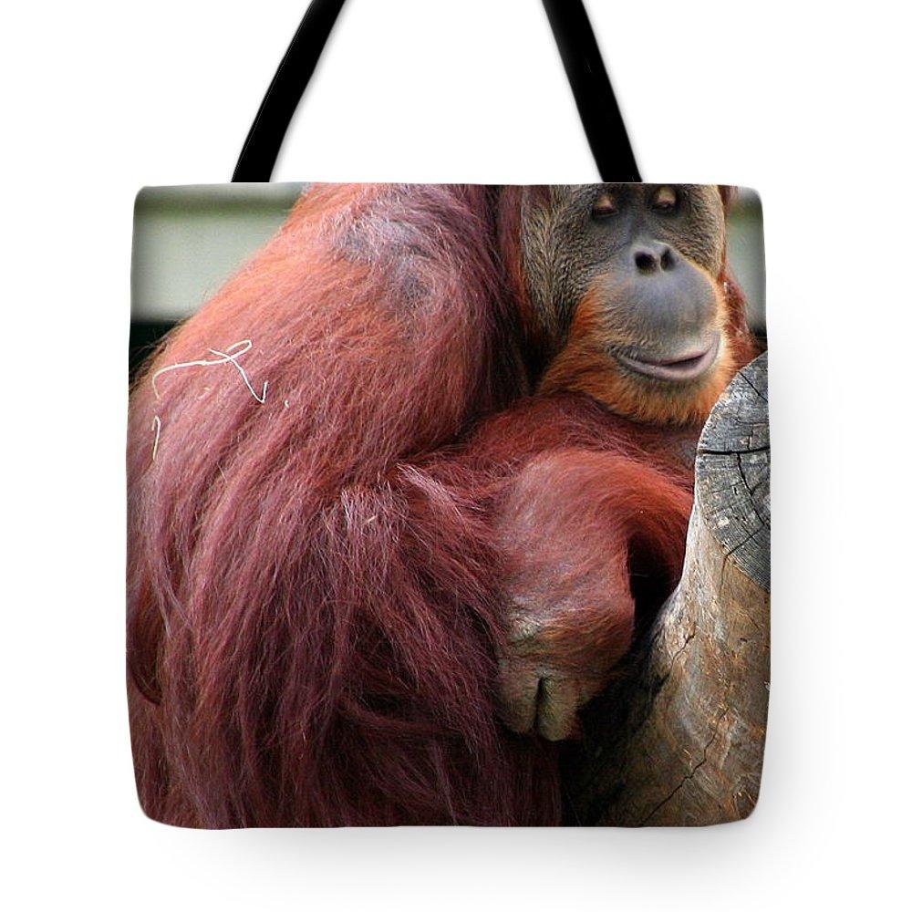 Sumatran Tote Bag featuring the photograph Sumatran Orangutan by Laurel Talabere