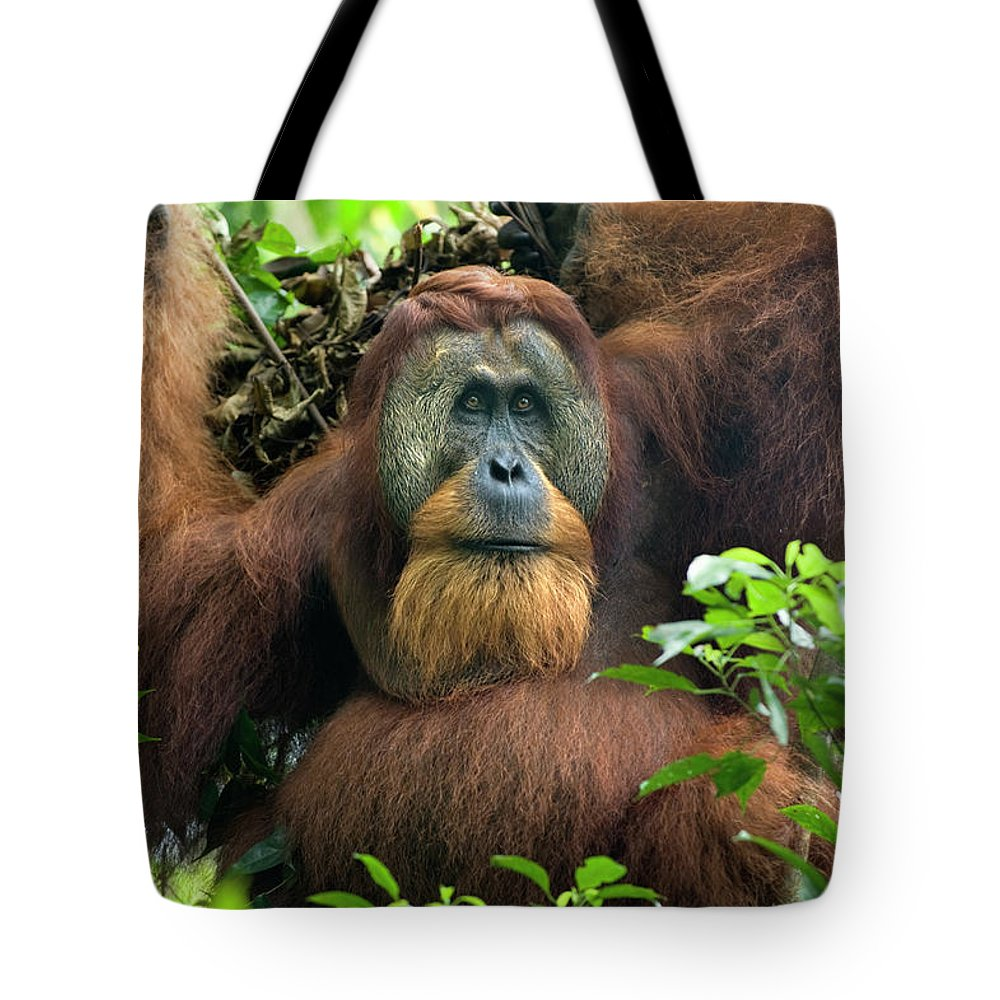 Mp Tote Bag featuring the photograph Sumatran Orangutan Pongo Abelii by Suzi Eszterhas