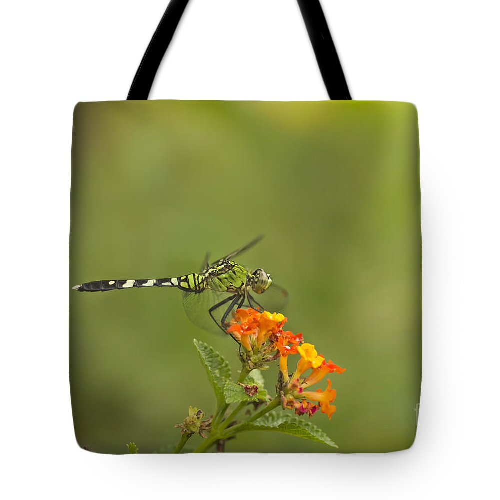 Dragonfly Tote Bag featuring the mixed media Sun Seeker by Kim Henderson