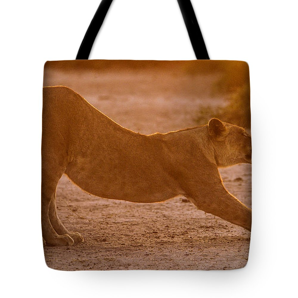 Action Tote Bag featuring the photograph Sun Stretch by Alistair Lyne