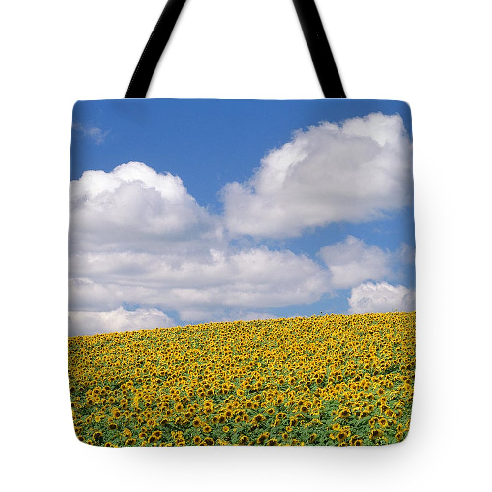 Cloud Tote Bag featuring the photograph Sunflowers, Austin, Manitoba by Mike Grandmailson