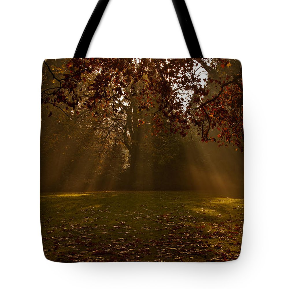 Sunlight Tote Bag featuring the photograph Sunlight And Leaves by Dawn OConnor