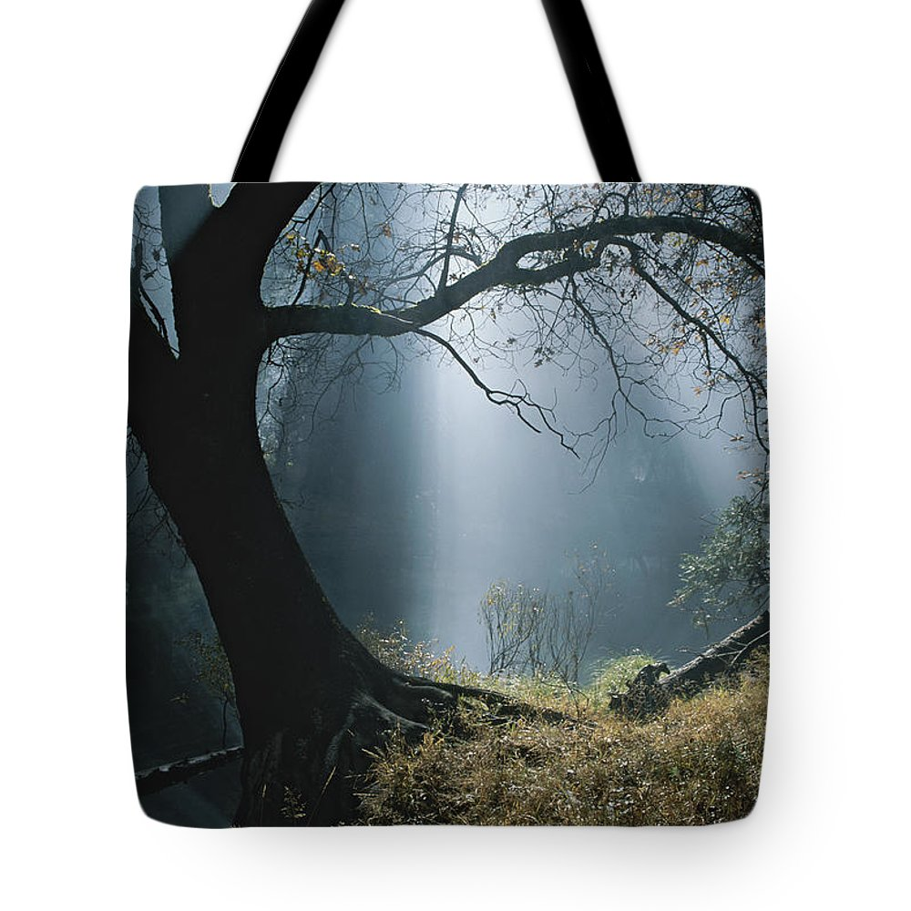 Natural Forces And Phenomena Tote Bag featuring the photograph Sunlight Beams Through The Treetops by Marc Moritsch