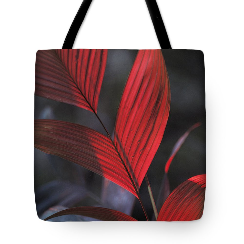South America Tote Bag featuring the photograph Sunlight Illuminates The Red Leaves by Michael Nichols