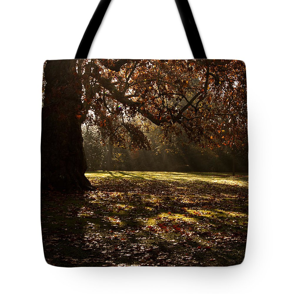 Sunlight Tote Bag featuring the photograph Sunlight In Trees by Dawn OConnor