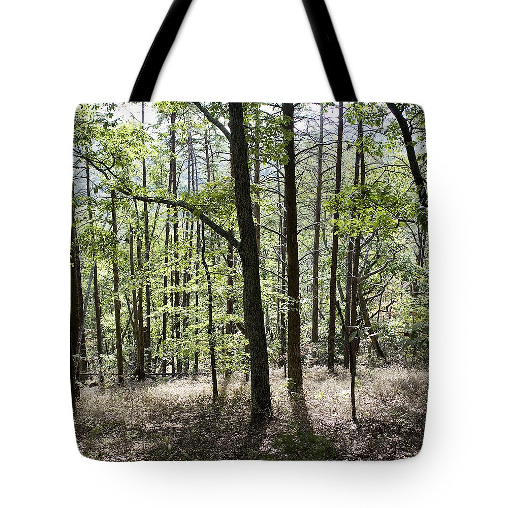 Trees Tote Bag featuring the photograph Sunny Afternoon by Lisha Segur