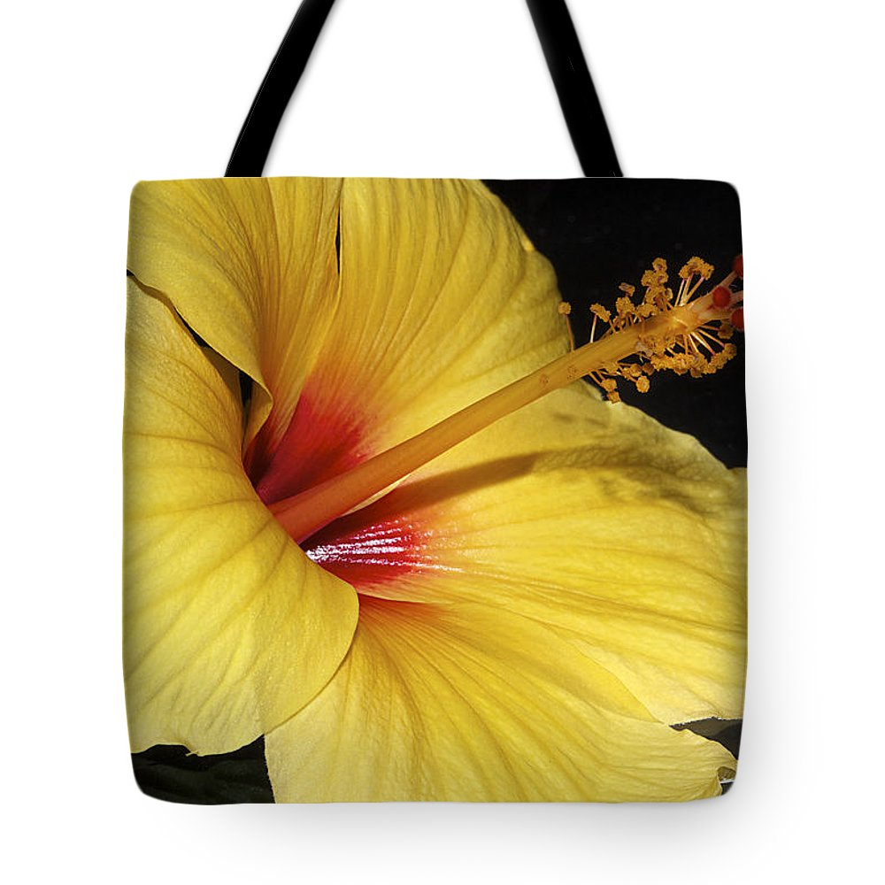 Hibiscus Tote Bag featuring the photograph Sunny Yellow Hibiscus Flower by Phyllis Denton