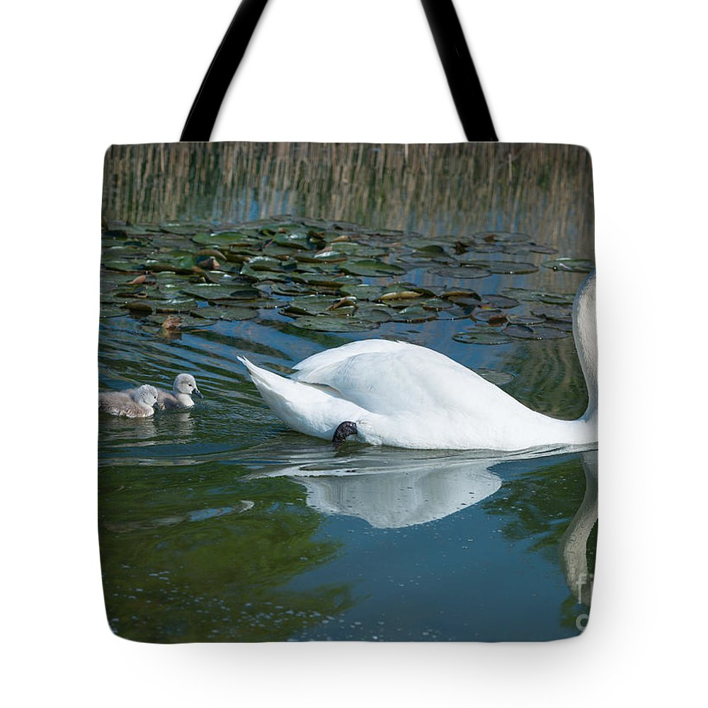 Swan Tote Bag featuring the photograph Swan With Cygnets by Andrew Michael