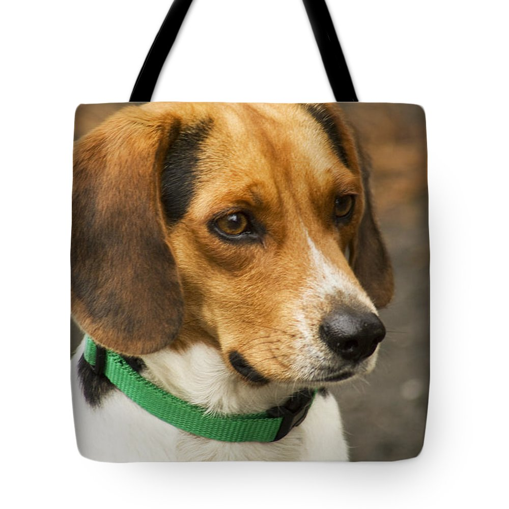 Beagle Tote Bag featuring the photograph Sweet Little Beagle Dog by Kathy Clark