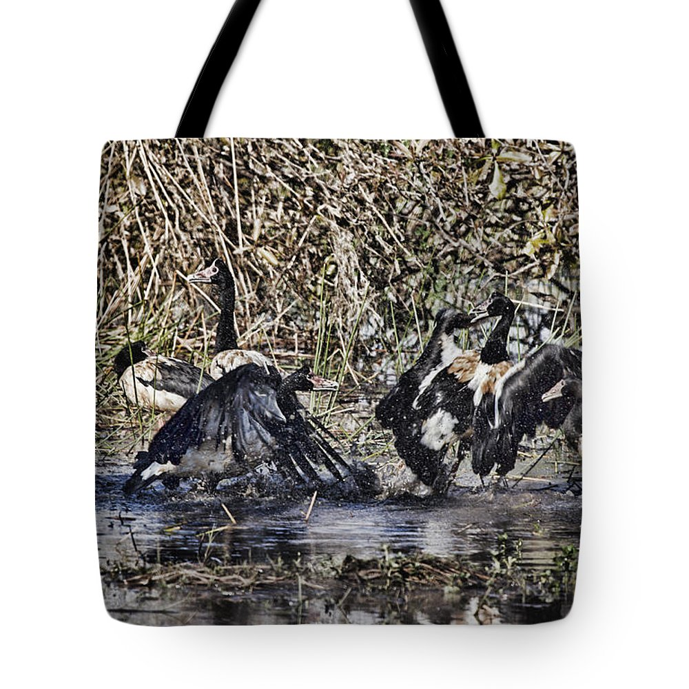 Magpie Geese Fighting-kakadu Tote Bag featuring the photograph Taking A Stance by Douglas Barnard