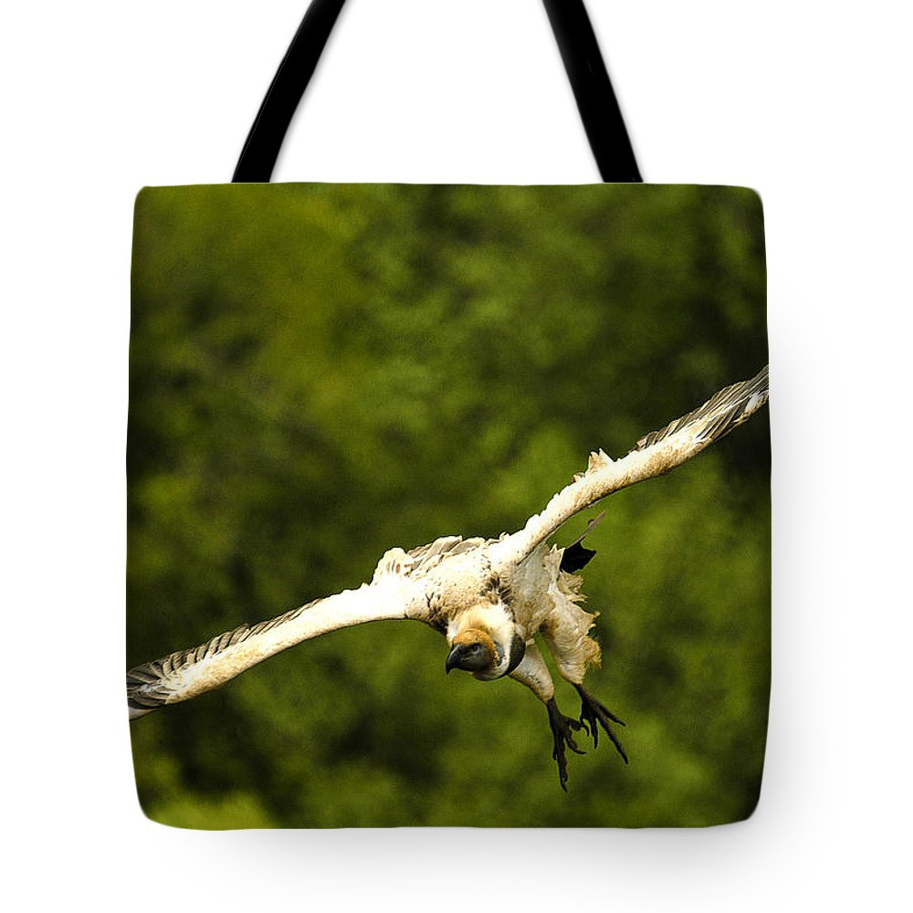 Action Tote Bag featuring the photograph Talonflite by Alistair Lyne