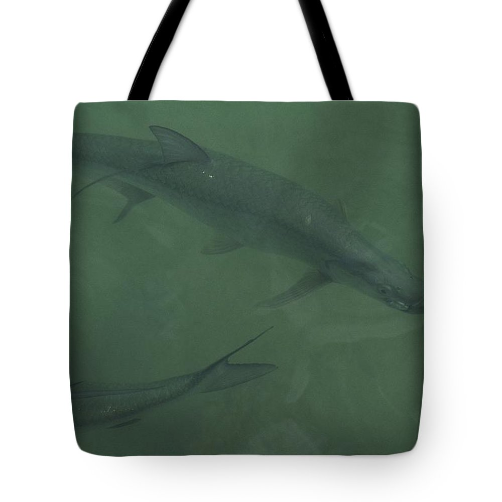 North America Tote Bag featuring the photograph Tarpon Fish Swim Through Green Water by Nicole Duplaix