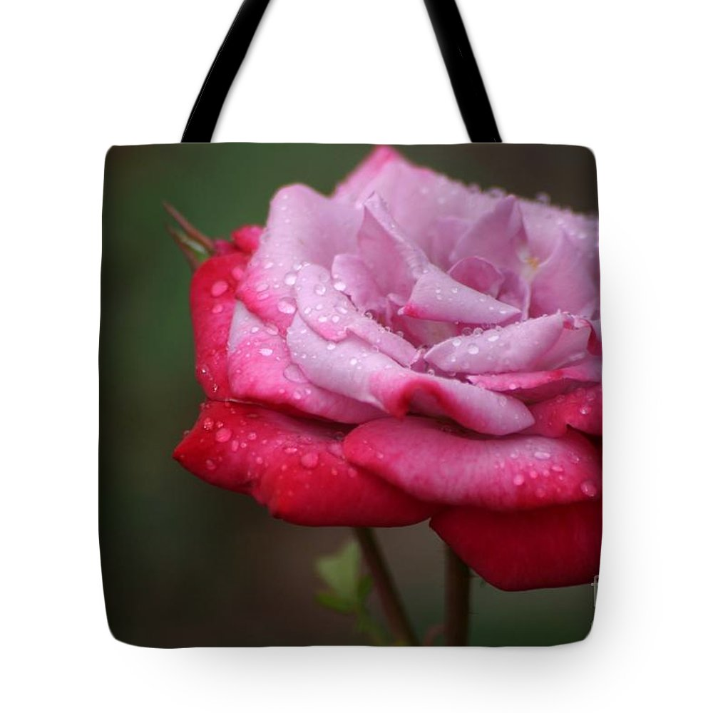 Roses Tote Bag featuring the photograph Tears From Heaven by Living Color Photography Lorraine Lynch