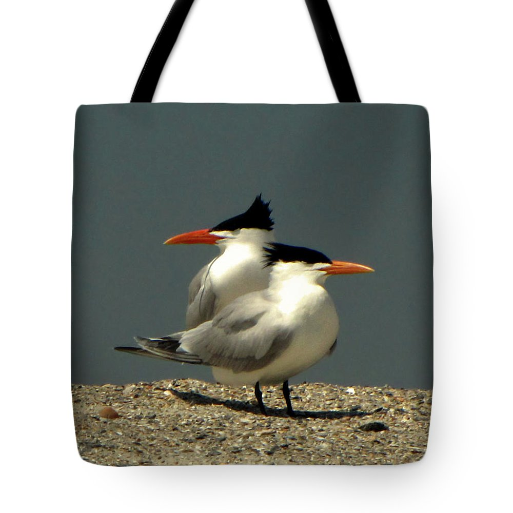 Nature Tote Bag featuring the photograph Terning Heads by Peg Urban