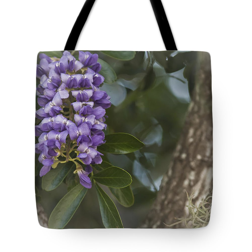 Texas Mountain Laurel Tote Bag featuring the photograph Texas Mountain Laurel by Kim Henderson