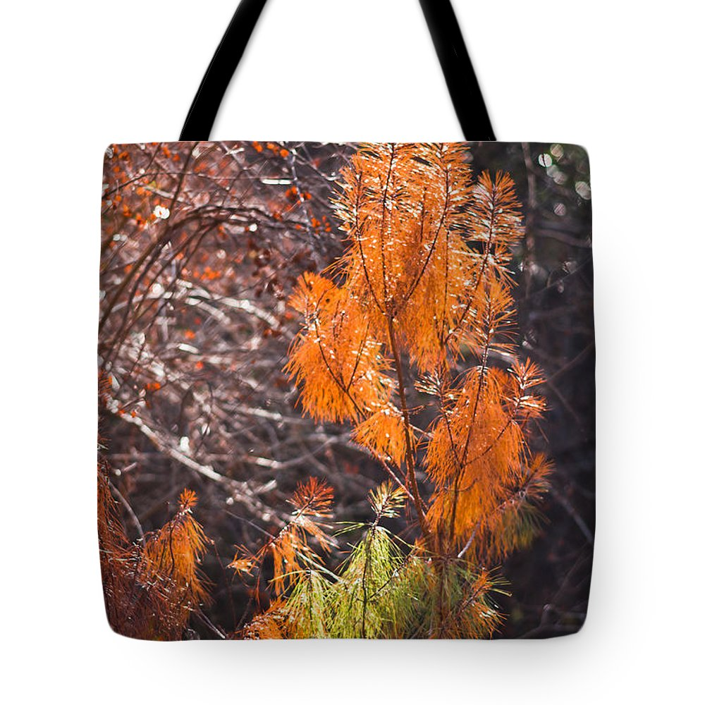 Fall Tote Bag featuring the photograph Texas Orange by Kim Henderson