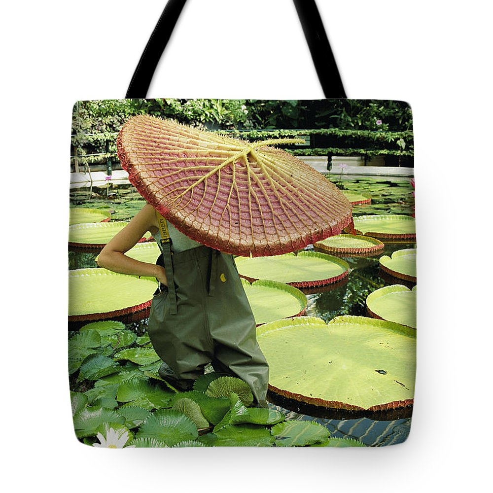 Color Image Tote Bag featuring the photograph The Cut Pad Of A Victoria Amazonica by Jonathan Blair