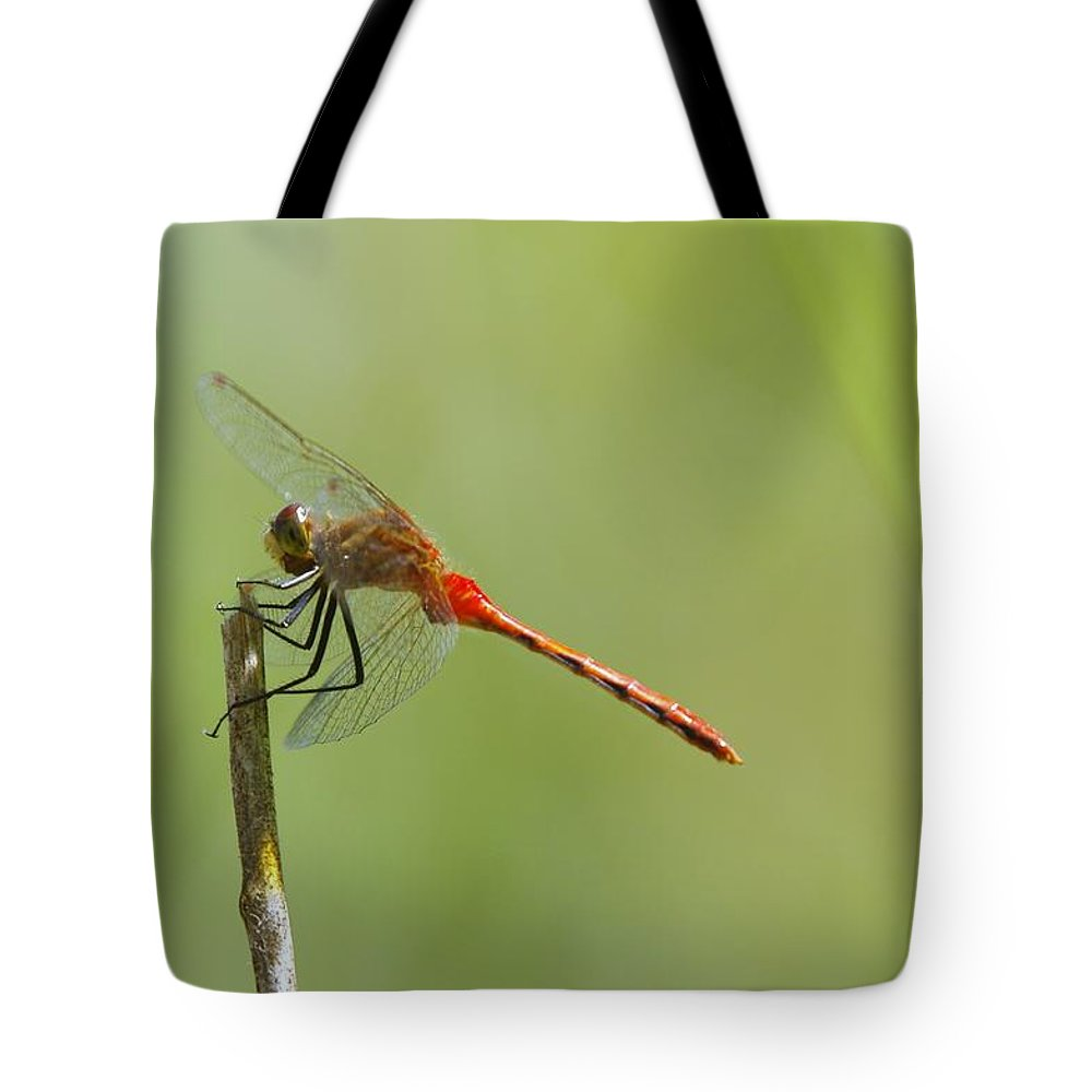 Insects Tote Bag featuring the photograph The Dragonfly Hangs On by Jeff Swan