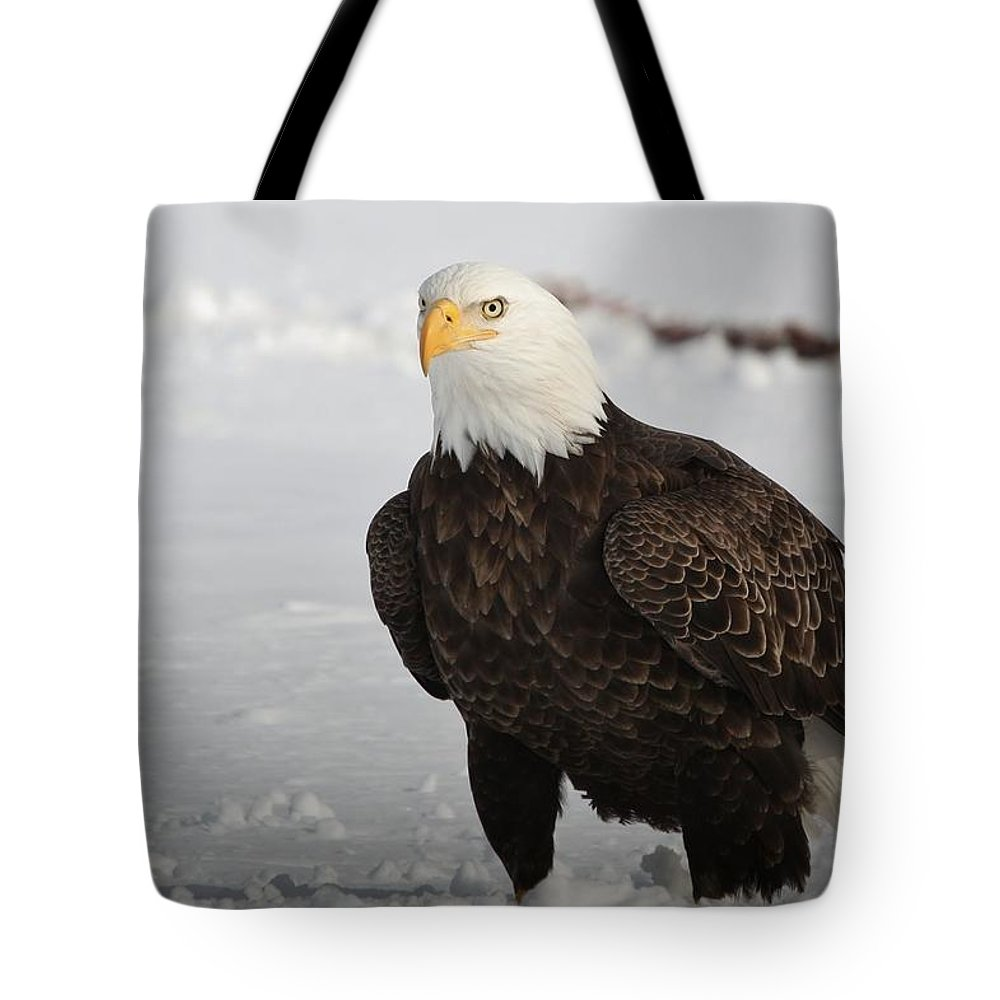 Bald Eagle Tote Bag featuring the photograph The Evil Eye by Teresa McGill
