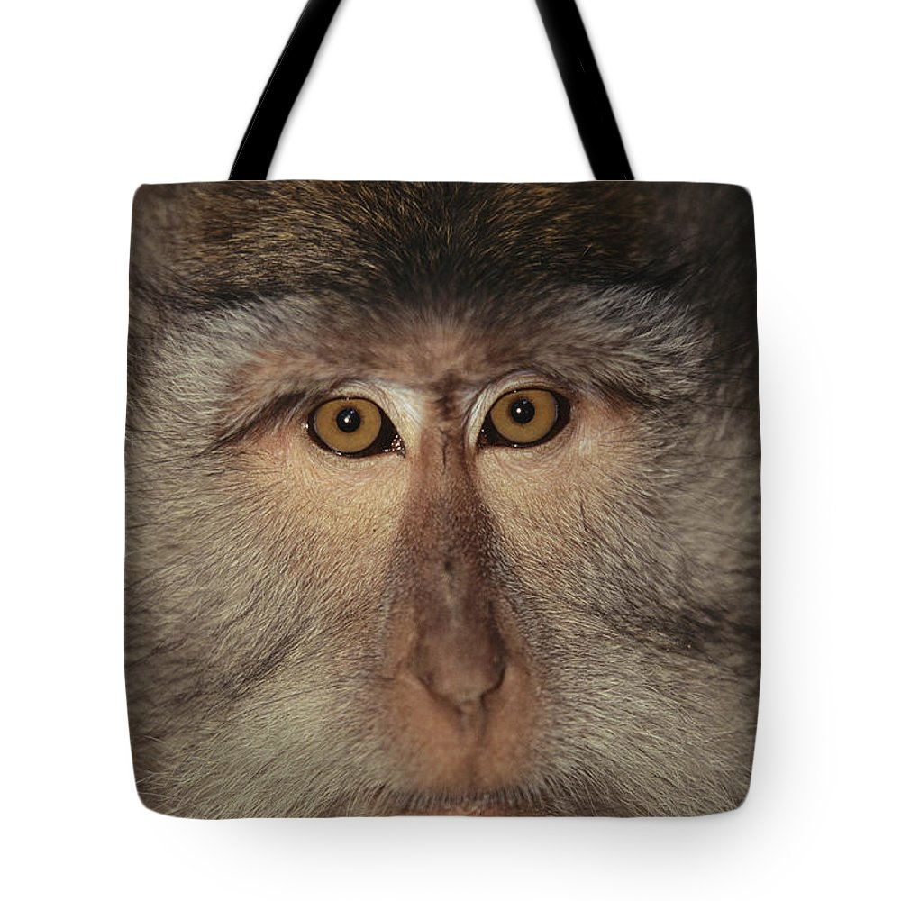 Asia Tote Bag featuring the photograph The Face Of A Long-tailed Macaque by Tim Laman