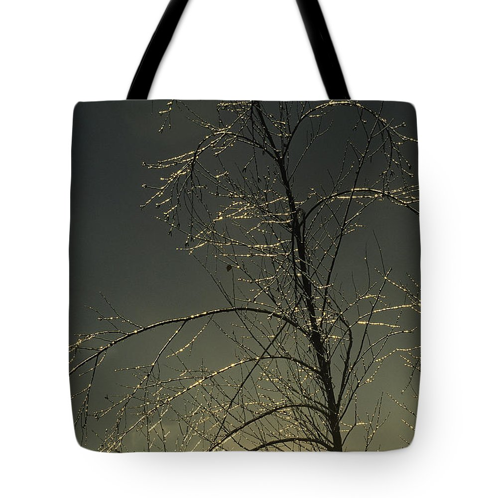 North America Tote Bag featuring the photograph The Frozen Branches Of A Small Tree by Raymond Gehman