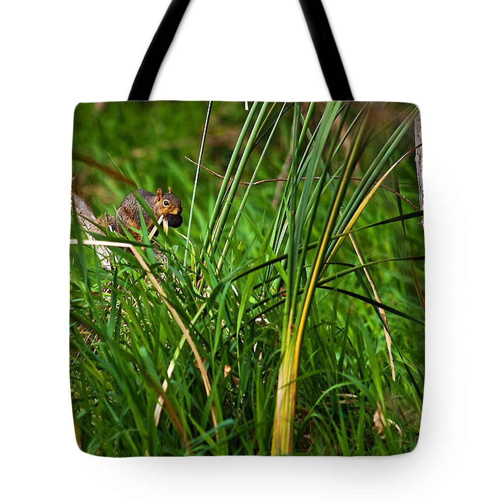 Squirrel Tote Bag featuring the photograph The Harvester by Edward Peterson