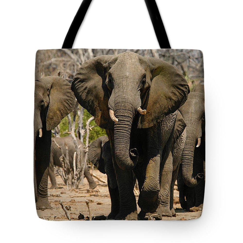Action Tote Bag featuring the photograph The Herd by Alistair Lyne