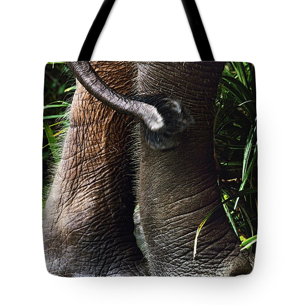 Danum Valley Tote Bag featuring the photograph The Hindquarters Of A Malaysian by Mattias Klum