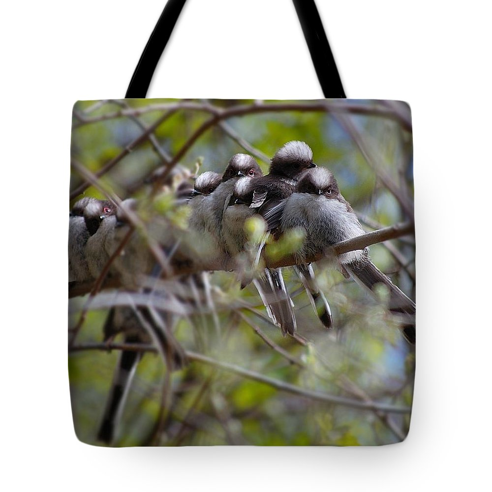 Long Tailed Tits Tote Bag featuring the photograph The Huddle by Gavin Macrae