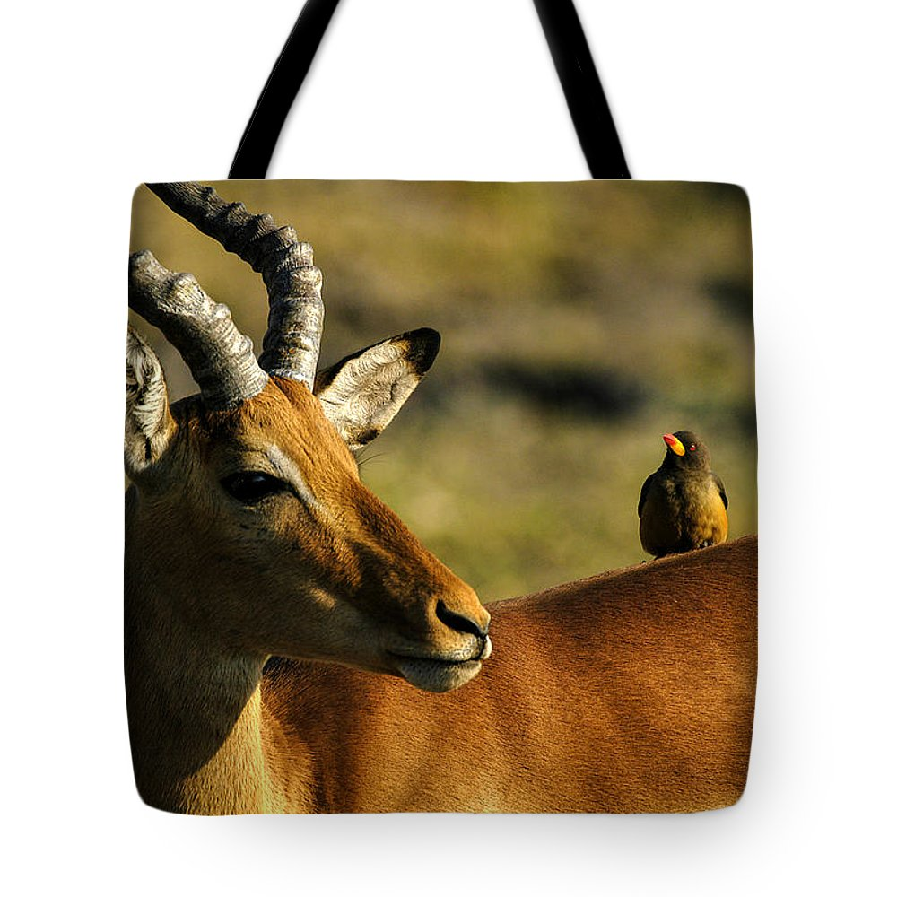 Action Tote Bag featuring the photograph The Look by Alistair Lyne