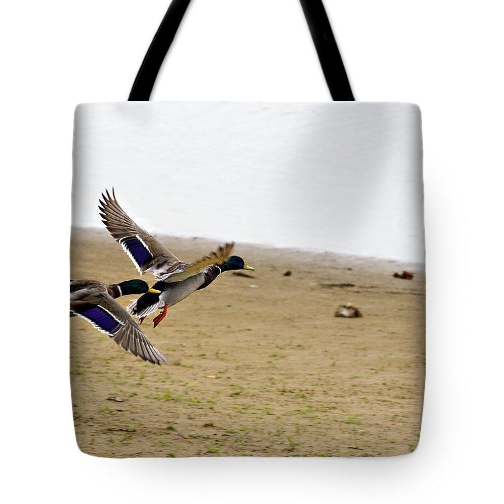 Mallard Ducks Tote Bag featuring the photograph The Mallard Ducks Flight by Douglas Barnard