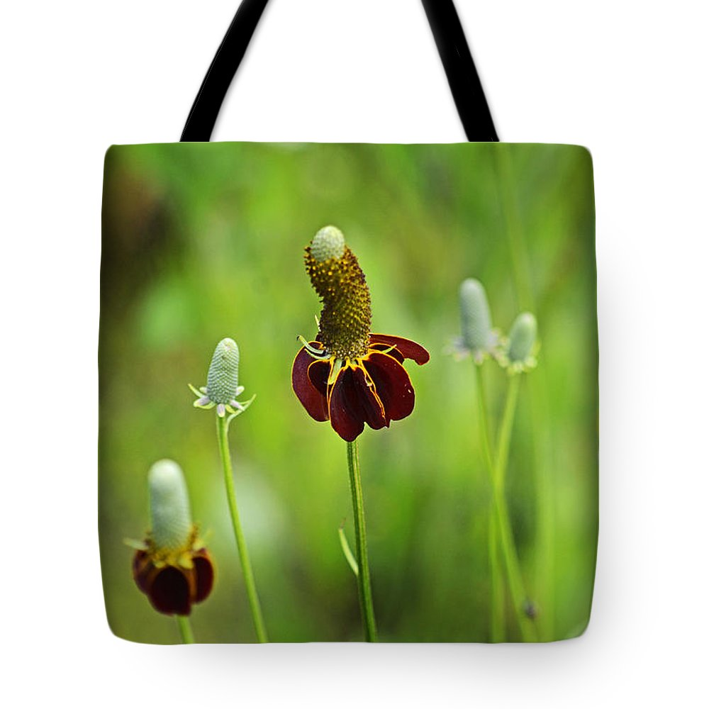 Ratibida Columnifera Tote Bag featuring the photograph The Mexican Hat Flower by Paul Mashburn