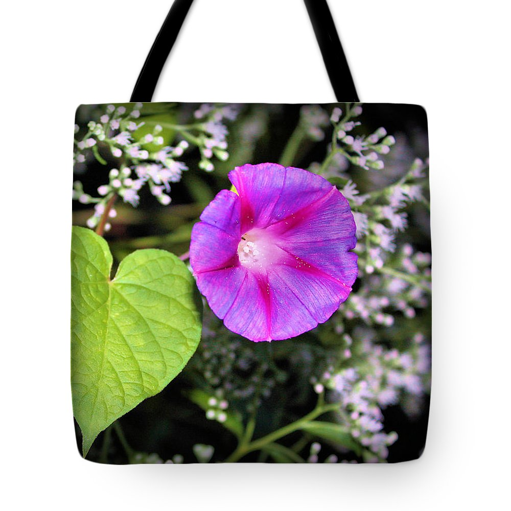 Morning Glory Tote Bag featuring the photograph The Queen's Morning Glory by Kristin Elmquist