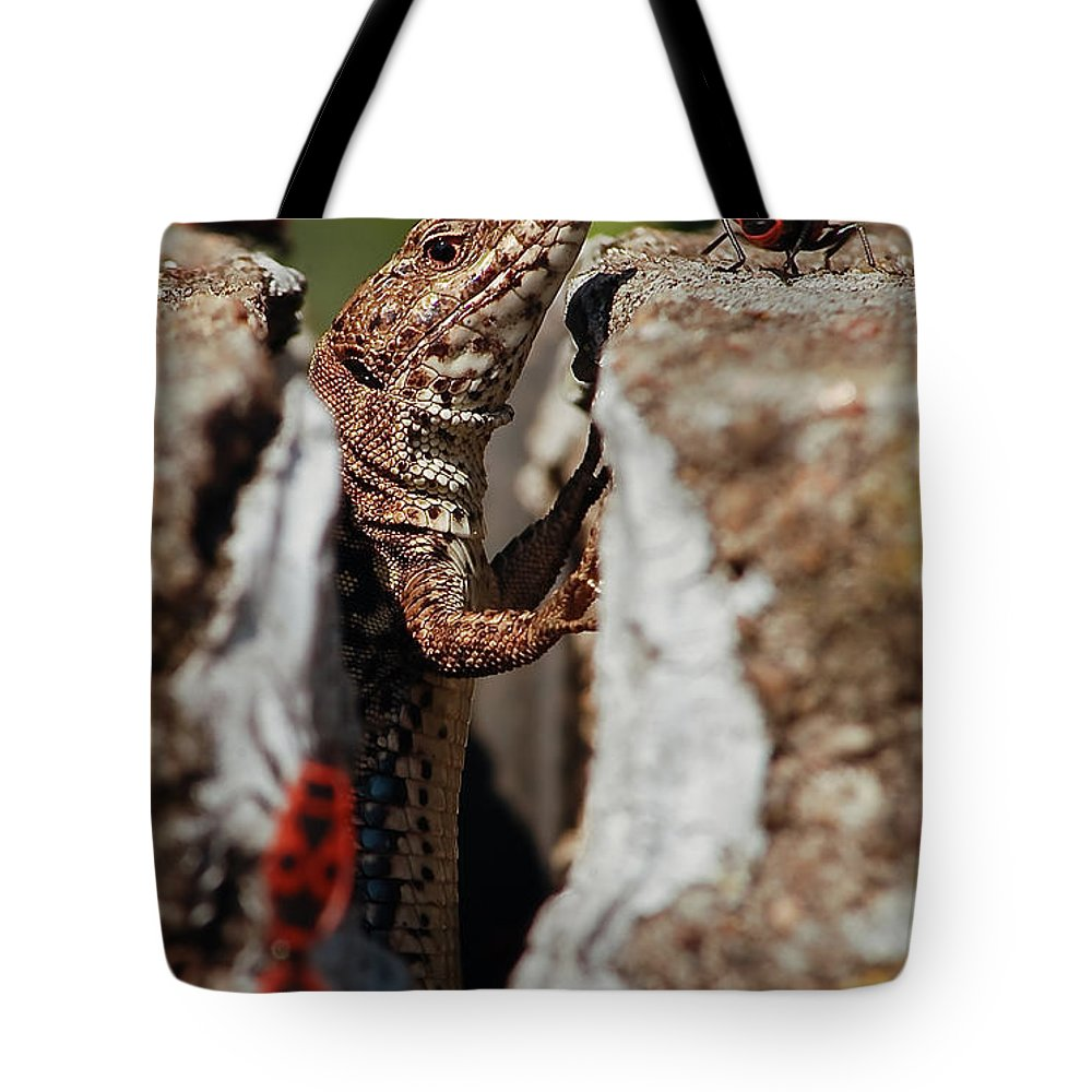Macrophotography Tote Bag featuring the photograph the random Lizard by Stwayne Keubrick