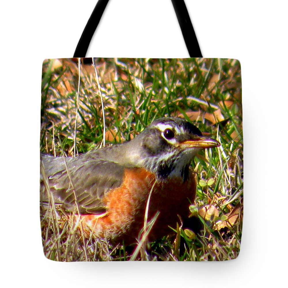 Robin Tote Bag featuring the photograph The Robin Stare by Kathy White