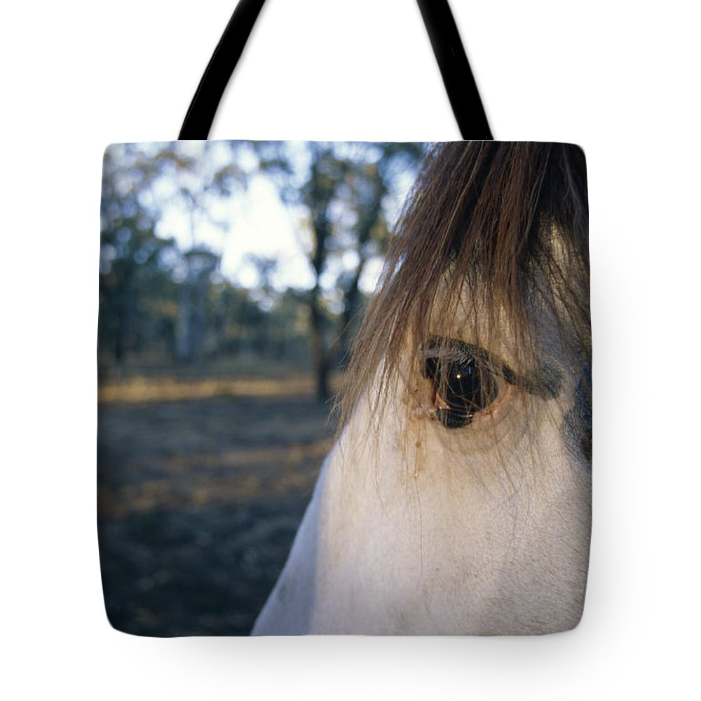Clydesdale Tote Bag featuring the photograph The Staring Eye Of A Clydesdale Horse by Jason Edwards
