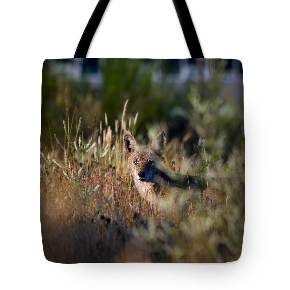 Coyote Tote Bag featuring the photograph The Story Is In The Eyes by Martin Cooper