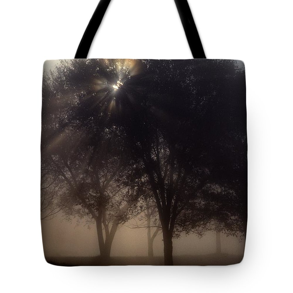 Plants Tote Bag featuring the photograph The Sun Peeks Through The Branches by Annie Griffiths