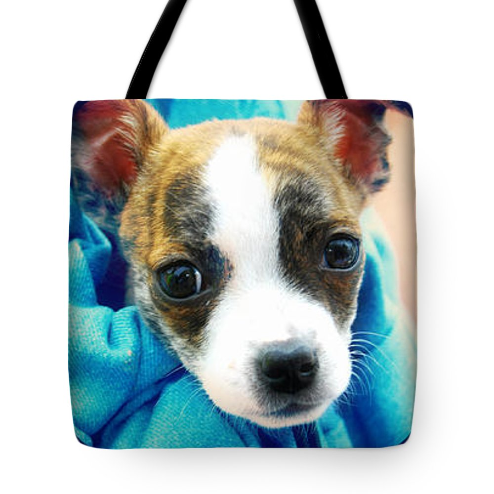 Macro Tote Bag featuring the photograph The Three Amigos Teacup Chihuahua by Peggy Franz