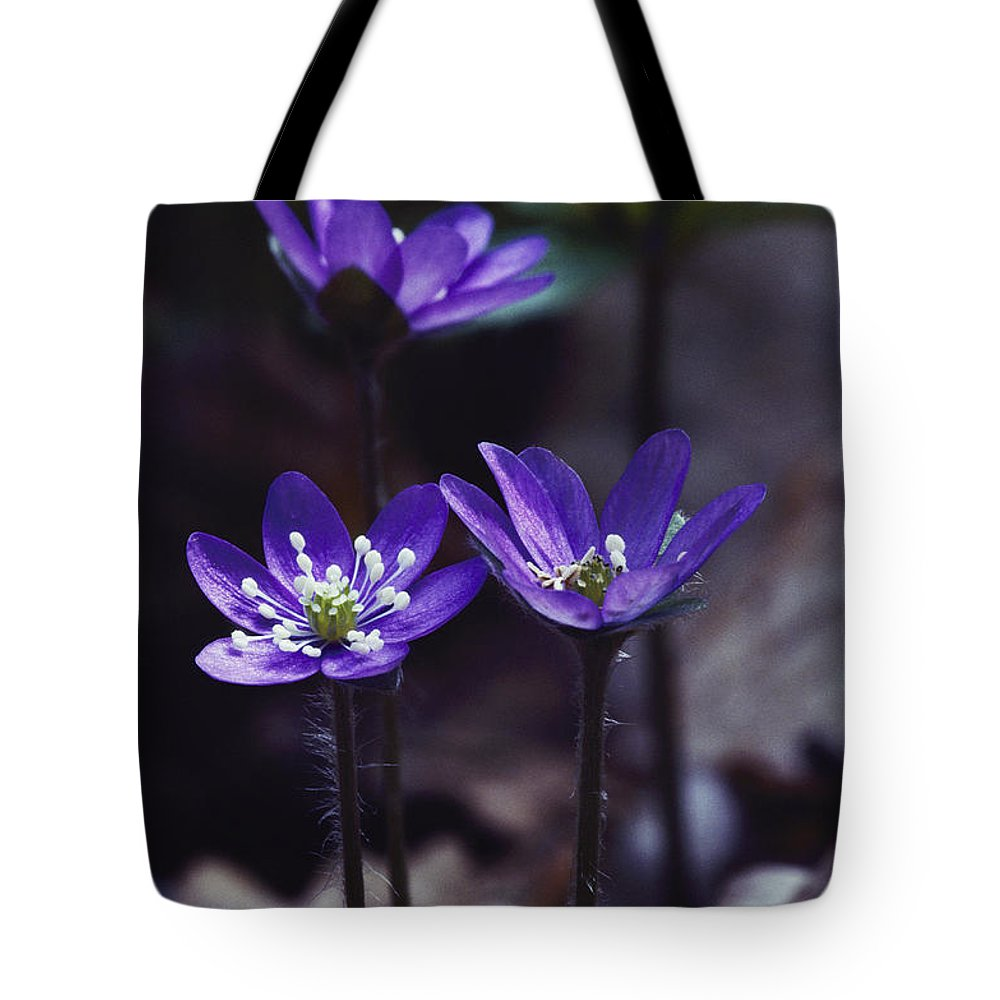 Plants Tote Bag featuring the photograph These Appear To Be Blossoms by Mattias Klum