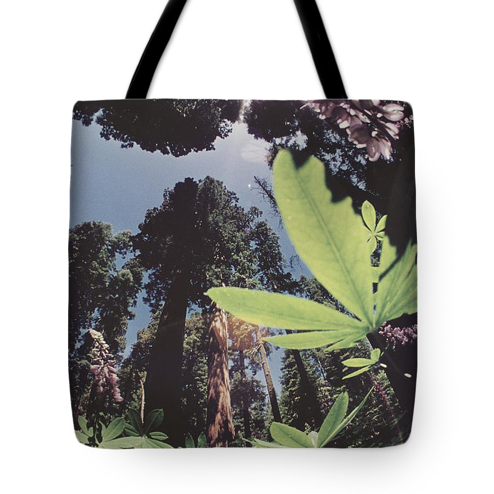 sequoia National Park Tote Bag featuring the photograph This Shot Is An Enlargement Of 55f13 by B. Anthony Stewart