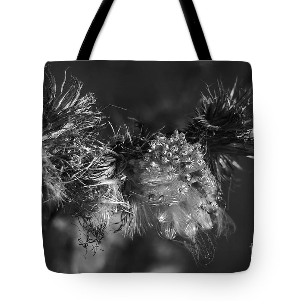 Cirsium Tote Bag featuring the photograph Thistle Seeds by Dariusz Gudowicz