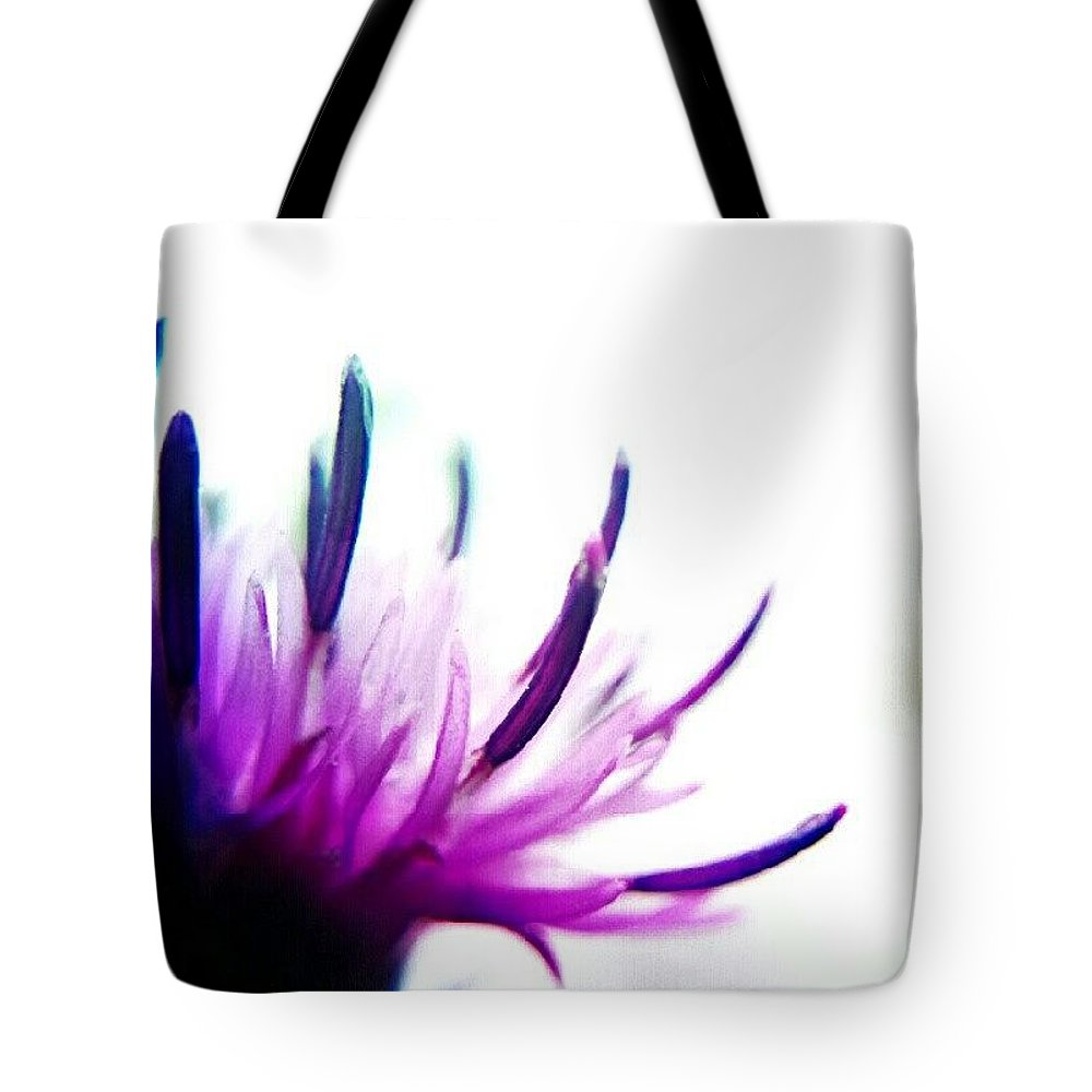 Designs Similar to Thistle by Vicki Field