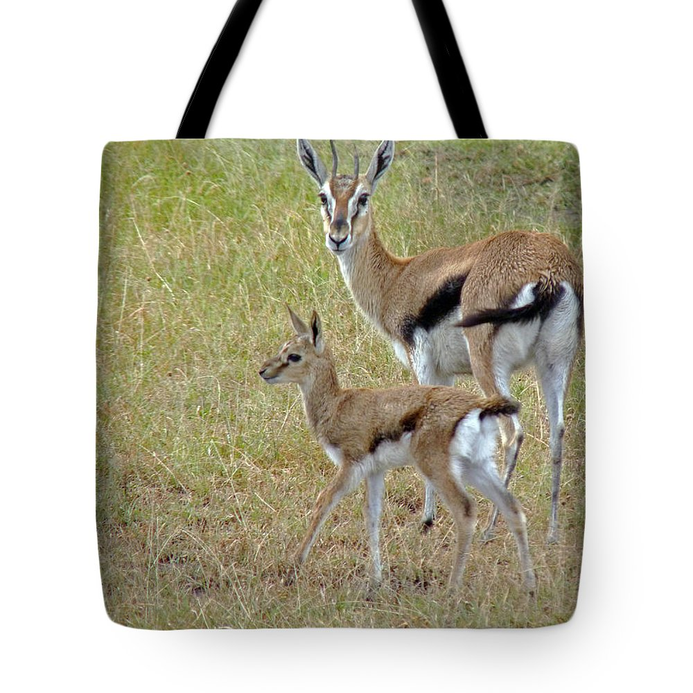 Gazelle Tote Bag featuring the photograph Thomsons Gazelle by Tony Murtagh